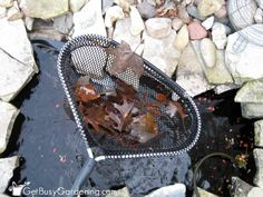 Garden ponds 224968943872335570 - Remove Leaves From Garden Pond Source by tburralexander