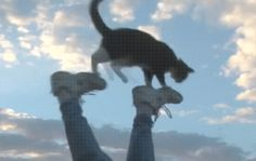 gif-tv - Funny Gifs and Photos Animals And Pets, Funny Animals, Cute Animals, Crazy Cat Lady, Crazy Cats, I Love Cats, Cute Cats, Funny Animal Pictures, Cat Gif