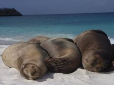 Hang with the seals and other animals in Galapagos. #bucketlist #galapagos