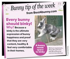 Every bunny should binky - sounds a lot less negative than: you're doing x y and z wrong. A nice tagline for a rabbit welfare campaign!