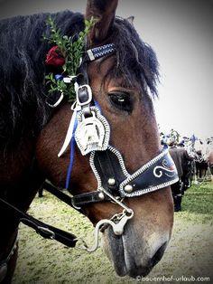 Leonhardiritt 2012 - schön geschmückte Pferde zu diesem Ehrentag