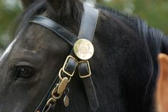 Horses - Kansas City Missouri Police Department - Mounted Patrol