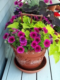 annual potted flowers - Google Search