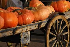 Who doesn't love pumpkins in the fall?
