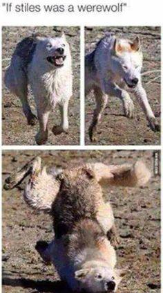 Si Stiles etais un loup-garou