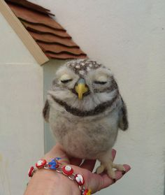 Little owl by pipspatterns on Etsy, $165.00