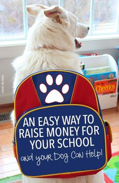 Earn money for your school and help the environment too! Learn how your dog's food can do both (and keep him healthy too). Such an easy school fundraiser idea! #ad #WellnessPet