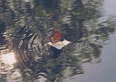 Monarch on soda cracker raft by Laser Bread, via Flickr