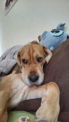 Hunde Foto: NICOLE und BARNY - Mein ein und alles Hier Dein Bild hochladen: http://ichliebehunde.com/hund-des-tages  #hund #hunde #hundebild #hundebilder #dog #dogs #dogfun  #dogpic #dogpictures