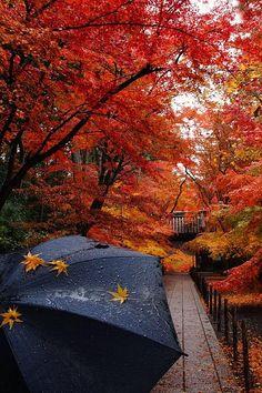 Autumn Walk in Nagaokakyo, Kyoto, Japan