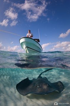 Stingrays, Cayman http://www.mmimob.lda.pt