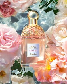 Rosa Rossa belongs to the Aqua Allegoria collection, the first collection of . Aqua, Rosa Tattoo, Color Rosa, Natural Cosmetics, Bergamot, Green And Gold, Key Ingredient, Color Schemes, Perfume Bottles