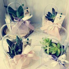 Bombonvivà | Bomboniere bonsai, piantine, candele, bomboniere particolari, bomboniere originali, bomboniere enogastrononiche, distillati, bomboniere food | Piante grasse