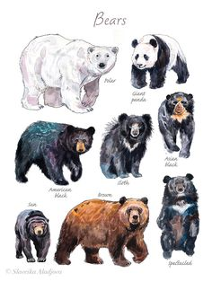 Bears chart watercolor painting print by Slaveika Aladjova, animal, illustration, home decor, – ARTSUPPLİES Bear Paintings, Painting Prints, Watercolor Paintings, Asian Black Bear, Art D'ours, Spectacled Bear, American Black Bear, Bear Watercolor, Sloth Bear