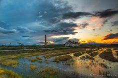 Esperando tormenta en los arrozales