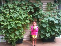 Happy gardener is Eva my daughter, she loves to grow cucumbers…  So happy with our cucumbers and tomatoes this year, thank you for making it possible with this great product!    - Eva M., Holmdel, NJ