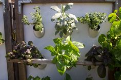 Are you thinking of starting a hydroponic garden? If so, you are on the verge of embarking on a gardening adventure. The sheer amount of benefits that comes with hydroponics gardening makes the effort more than worth it. Home Hydroponics, Hydroponic Growing, Hydroponic Gardening, Aquaponics, Gardening Tips, Farm Stand, Urban Homesteading, How To Grow Taller, Tall Plants