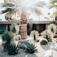 Front Garden Design Palm Springs love - Before & After: Former Party Pad Becomes a Sleek Palm Springs Vacation Home - Sunset.Front Garden Design Palm Springs love - Before & After: Former Party Pad Becomes a Sleek Palm Springs Vacation Home - Sunset