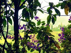 Flores | por osoriotrujillo