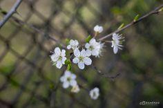 Elderberry flowers with macro stick