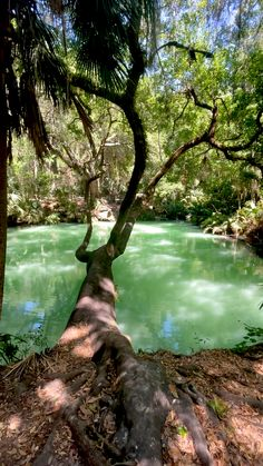 Green Springs, Florida