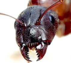 Image result for insect mandibles