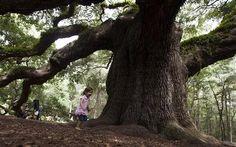 Help Save the Angel Tree
