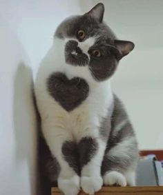 love - your daily dose of funny cats - cute kittens - pet memes - pets in clothes - kitty breeds - sweet animal pictures - perfect photos for cat moms Baby Animals Super Cute, Cute Baby Cats, Cute Little Animals, Cute Cats And Kittens, Cute Funny Animals, Kittens Cutest, Cute Dogs, Cute Babies, Funny Kittens