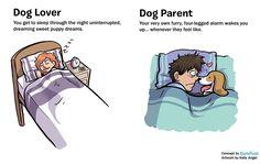 7 diferenças entre gostar de cães e ser dono de um cão   Tá Bonito