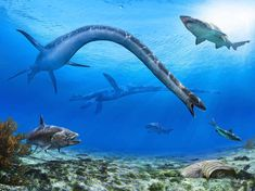 Amazingly Vivid Dino Illustrations Reveal a Brutal Prehistoric World | This piece -- commissioned to be sold as prints for fund-raising for the building of Canada's newest paleontological museum, the Phillip J. Currie Dinosaur Museum -- depicts the extremely long-necked plesiosaur, Albertonectes, hunting fish in the Bearpaw Sea. Julius Csotonyi | WIRED.com