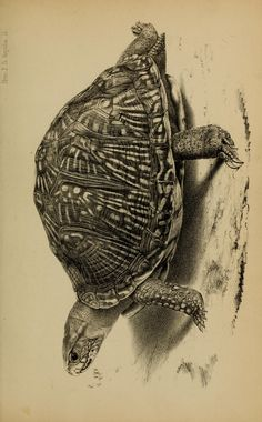 v.4 (1848-1860) [Plates:Reptilia et pisces] - Proceedings of the Zoological Society of London. - Biodiversity Heritage Library