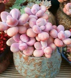 Pebbly Succulents..