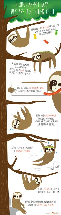 Sloths aren't lazy, they are just super chill Sloths, Chilling, Good To Know, Role Models, South America, Lazy, Random, Animals, Templates