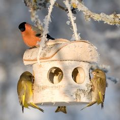nest4nature foderhus i birketræ