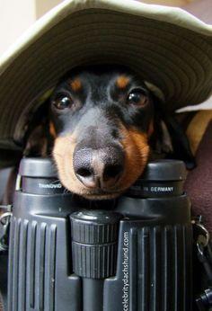 I'm Goin' on a Trip! – Crusoe the Celebrity Dachshund