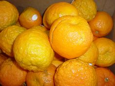 Seville marmalade oranges are in full swing! At our store this week.