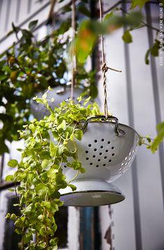 Hang een GEMAK vergiet op en plaats er een hangplant in. De gaatjes zijn ideaal om het water door te laten vloeien.