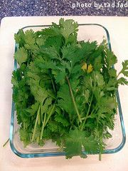 I never knew how to Harvest Cilantro without killing the plant. This site has all kinds of tips for growing, harvesting, storing & recipes for all herbs.