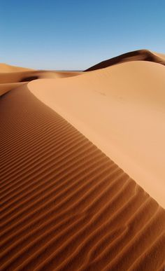 die wüste lebt disney - Google-Suche