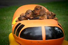 We want a ride in the weiner mobile