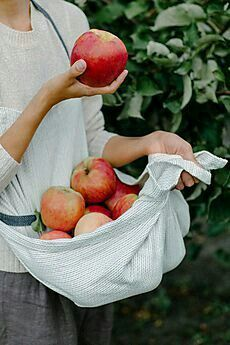 Country Decor, Craft Ideas, Comfort Food, and Antique Appraisals - Country Living Magazine Apple Farm, Apple Orchard, Apples Photography, Food Photography, Apple Tree, Red Apple, Apple Harvest, Morris, Jolie Photo