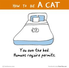 HOW TO BE A CAT? If you know, tell us here http://lastlemon.com/cat_submit/ and we'll illustrate it.