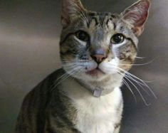 Cutie pie Komodo is at the Manhattan  ACC  and will be killed at noon tomorrow  Jan 14  2016.please can someone save him from the Manhattan ACC URGENT. He needs a rescuer foster or adopter.please visit pets on death row on Facebook URGENT  .don't let him die alone in a cruel manner.