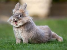 insolite lapin paques