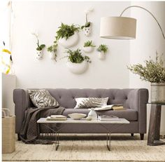 Wall Plants and Couch  WestElm