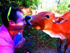 Cow + Louis, sitting in a tree, K-I-S-S-I-N-G!!! SMOOCH! Don Khon, 4000 Islands, Laos http://twistedfootsteps.com/4000-islands-pt-i/