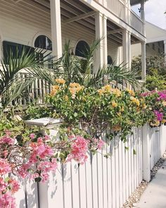 Flowers covering a white picket fence-swoon! #adltravel #keywest #flowers #pink #yellow #spring