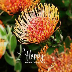 Life Isa, Nelson Mandela, Canning, Day, Garden, Plants, Garten, Home Canning, Gardens