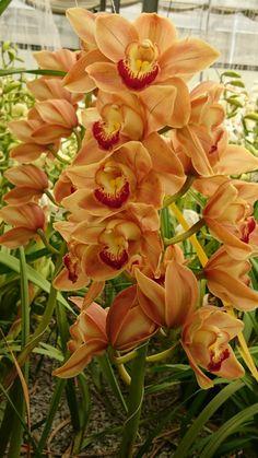 Orchids at Duckitt Nursery