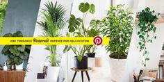 10 plantes parfaites pour la salle de bain • Hellocoton